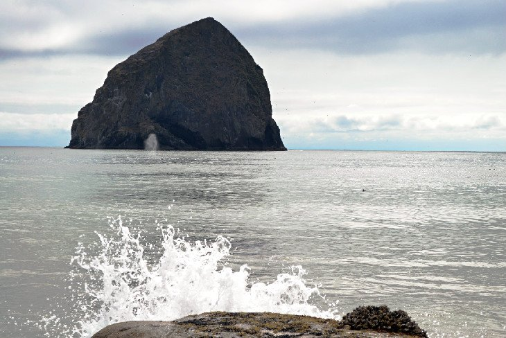 Whale spout in front of Haystack Rock at the Cape Kiwanda State Scenic Area