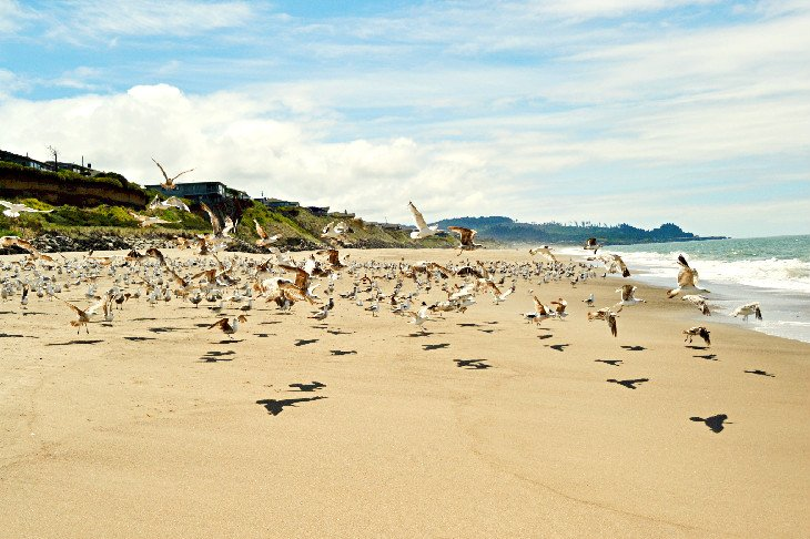 Playa de Gleneden