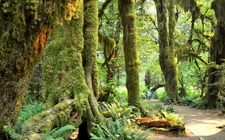 12 Top-Rated Campgrounds in Olympic National Park | PlanetWare
