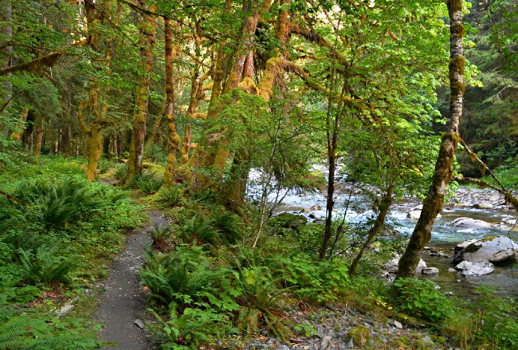 The East Fork of the Quinault River Trail