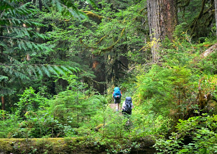 Hikers on the Hoh River Trail