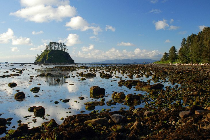 The Ozette Coast