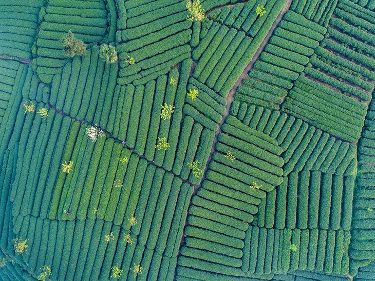 Aerial view of Mengdingshan Tea Plantation