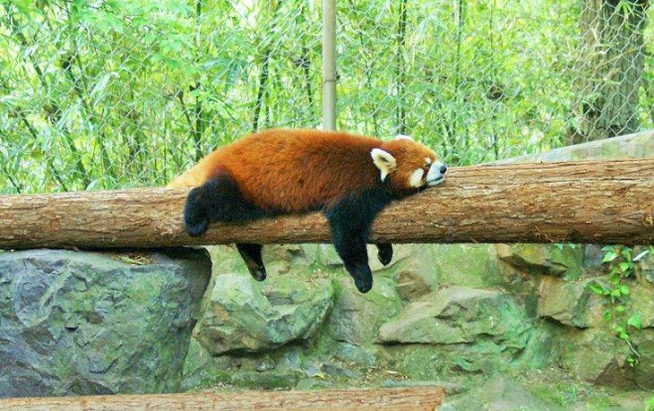 Zoológico de Hangzhou