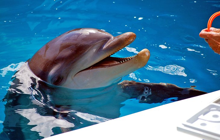 Winter at the Clearwater Marine Aquarium