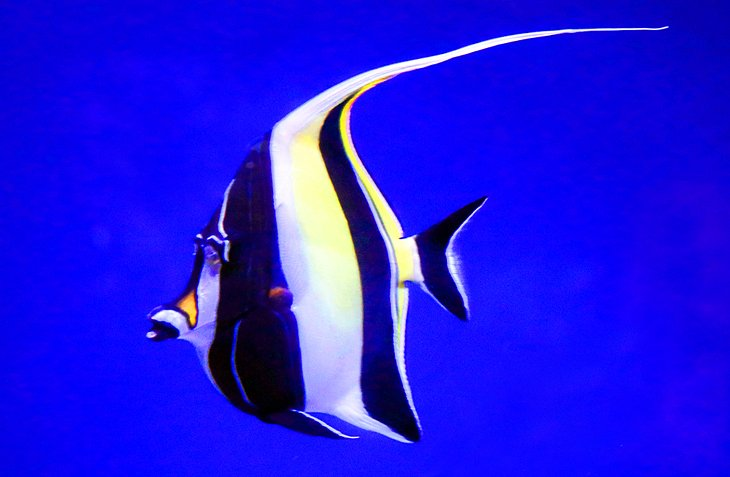 Angel Fish at the Maui Ocean Center