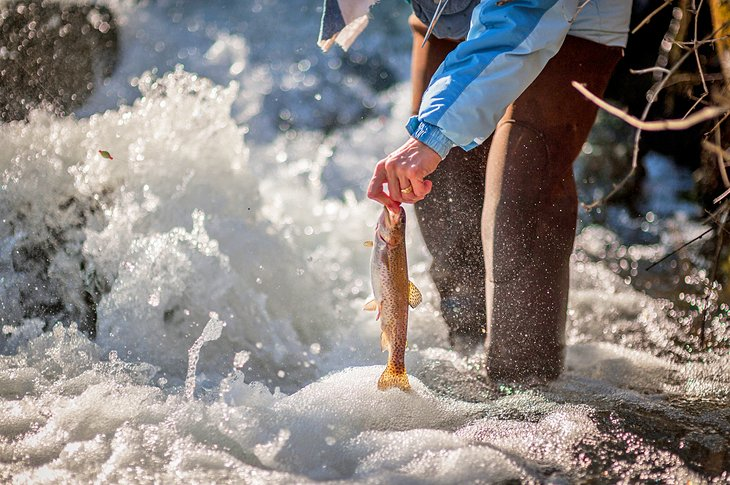 12 Top-Rated Trout Fishing Lakes & Rivers in Missouri