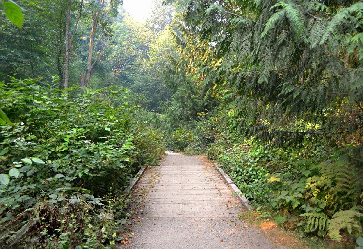Pipers Creek Trail at Carkeek Park