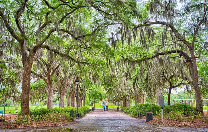 Tree-lined Savannah park