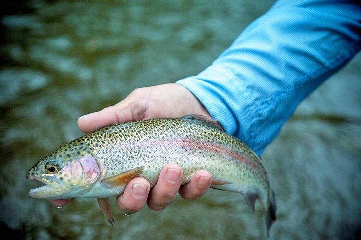 10 Top-Rated Rivers for Trout Fishing in North Carolina
