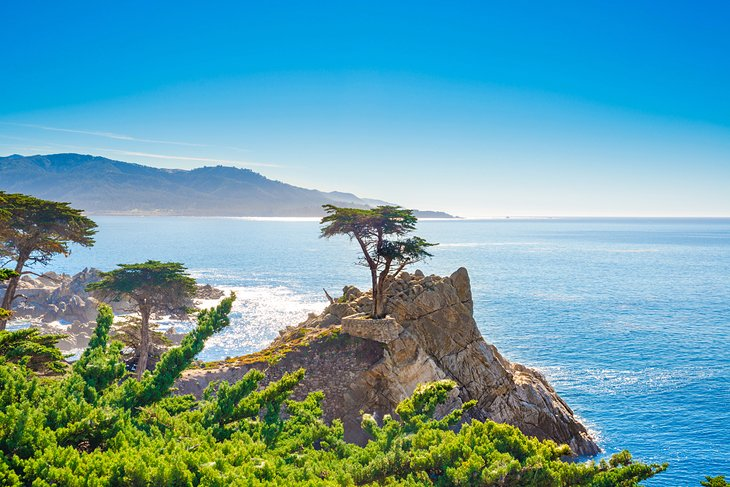 The Lone Cypress, 17 Mile Drive in Pebble Beach