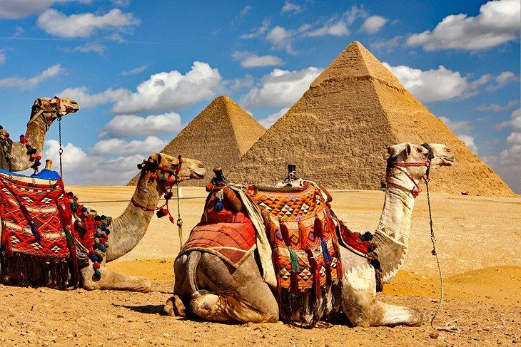 Paseos en camello en las pirámides