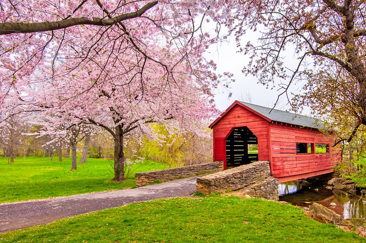 Cherry blossoms over a covered bridge