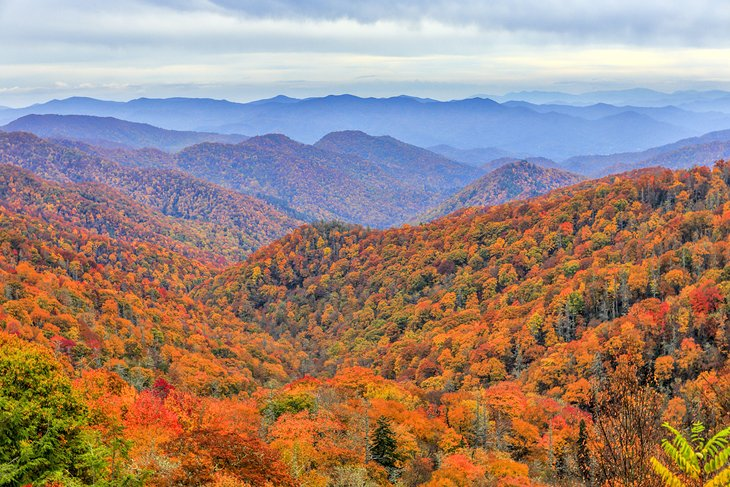 Fall foliage in Great Smoky Mountains National Park