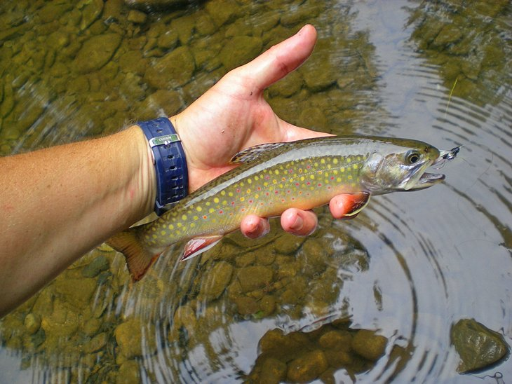 10 Top-Rated Rivers & Lakes for Trout Fishing in West