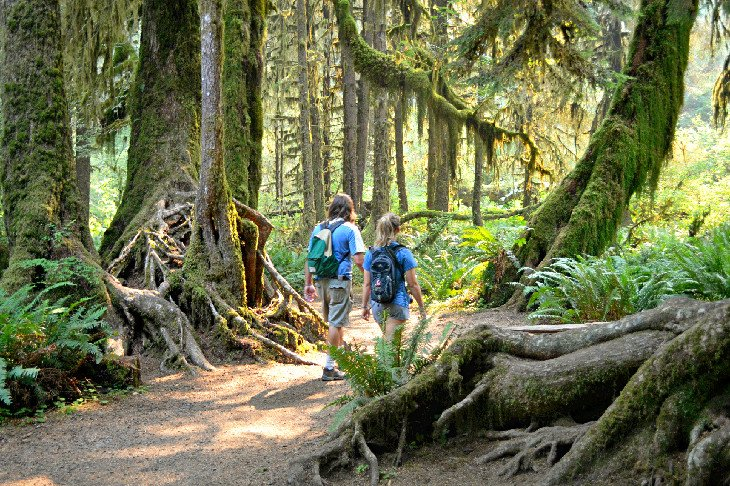 Hikers in the Hoh Rain Forest at Olympic National Park