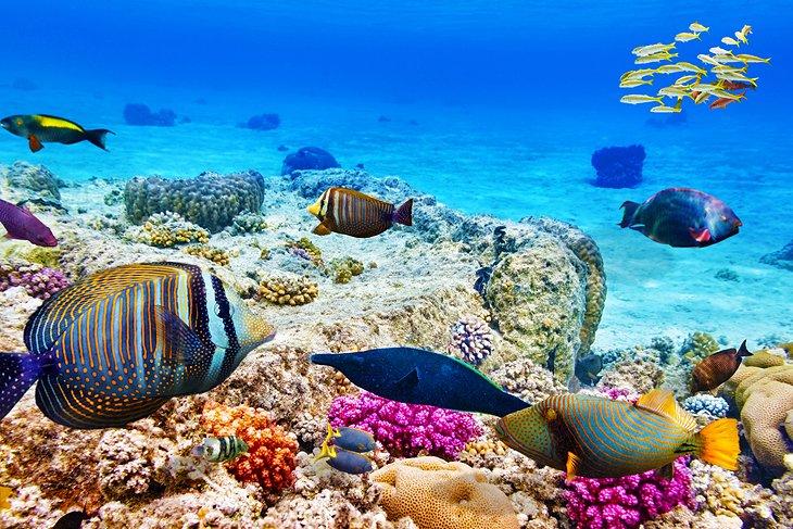Peces de colores en el Mar Rojo en Hurghada