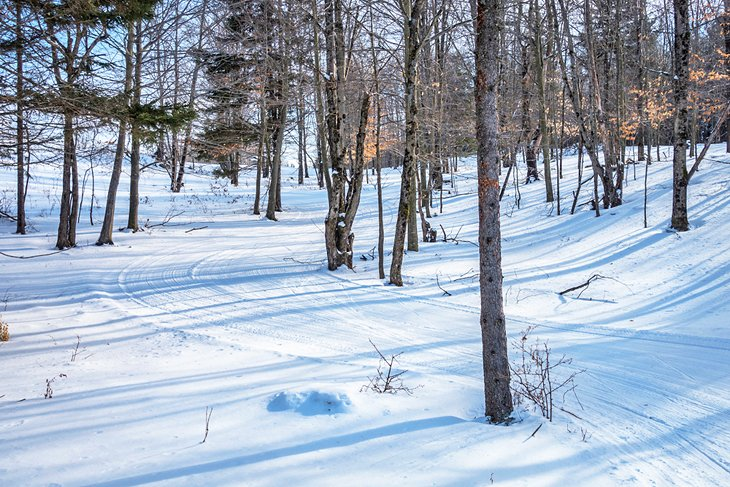Cross-country ski trails through the Vermont woods