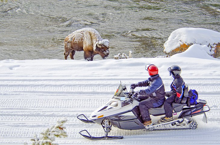 Snowmobilers watching a bison in Yellowstone National Park