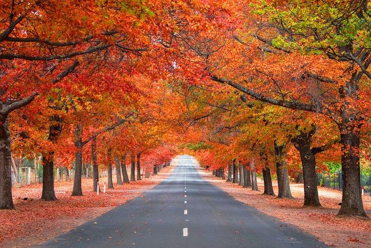 Mount Macedon fall colors