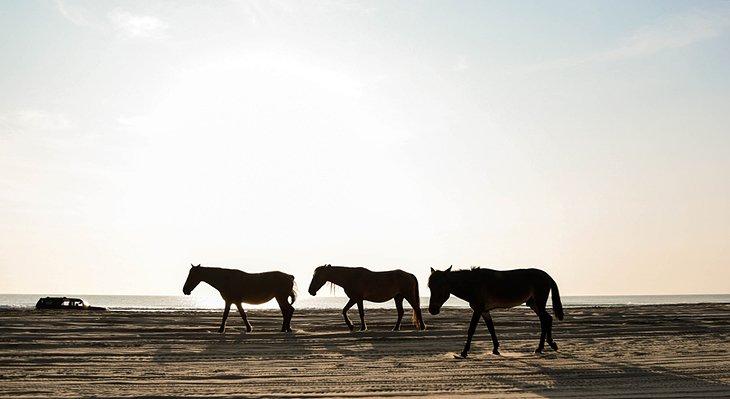 Caballos salvajes en la playa de Carova