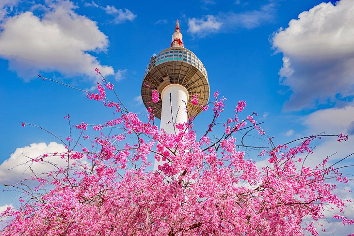 Cherry blossoms in front of Seoul Tower