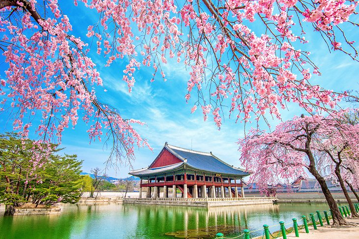 Gyeongbokgung Palace with cherry blossoms