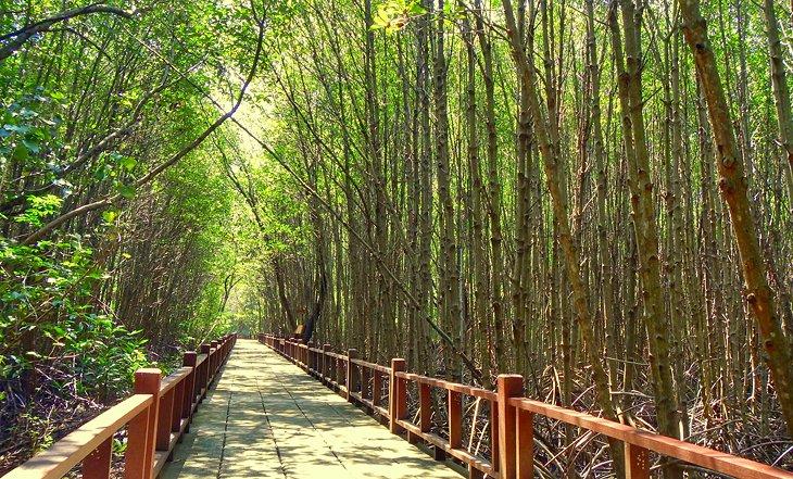 Деревянная пешеходная дорожка через мангровый лес Пранбури.
