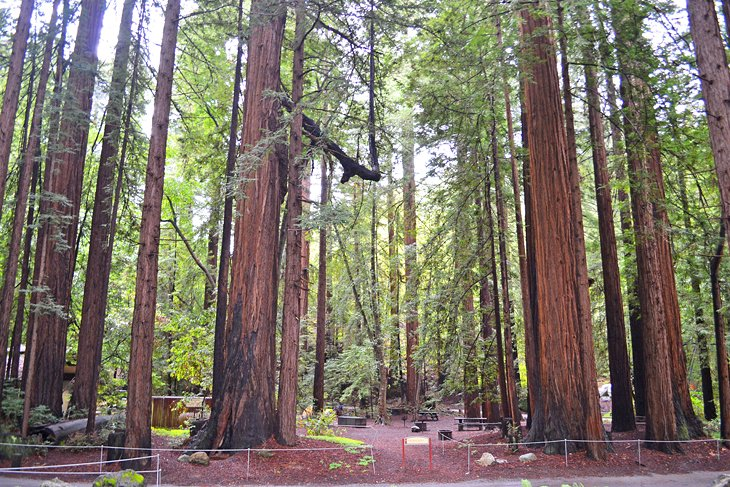 12 Top Rated Campgrounds Near Big Sur Pfeiffer Big Sur State Park Ca Planetware
