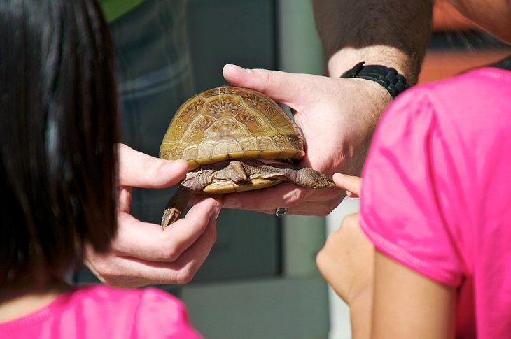 Turtle presentation at Happy Hollow Park & Zoo