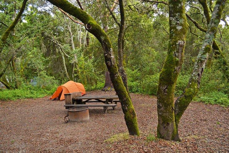 11 Top-Rated Campgrounds near Santa Cruz, CA | PlanetWare