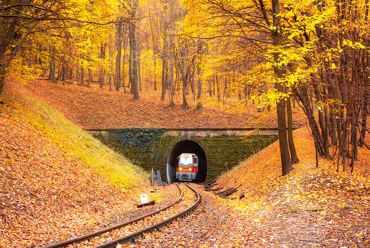 Train traveling through the Hungarian woods in the fall
