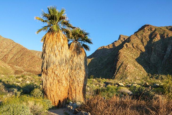 Palm Canyon, Parque Estatal Anza-Borrego