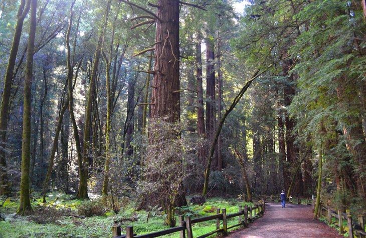 Parque estatal Henry Cowell Redwoods