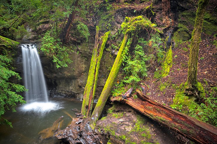 Sempervirens Falls en el Sequoia Trail