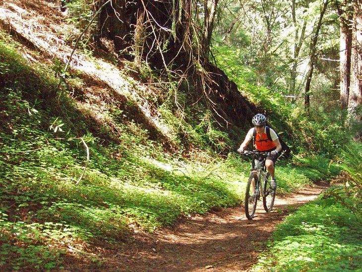 Ciclista de montaña sobre Wilder Ridge Trail