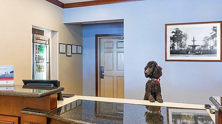 Fuente de la foto: Staybridge Suites Savannah Historic District