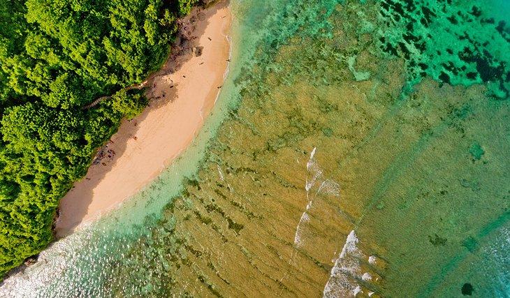 Playa Green Bowl
