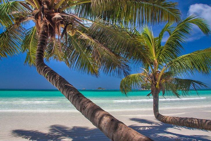 Palmas de coco en Anse Volbert