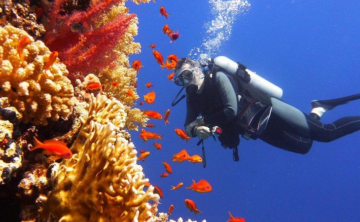 Buceador viendo peces de colores y corales en la Gran Barrera de Coral