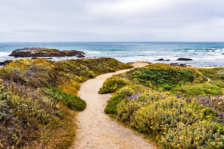 Camino a la playa estatal Pescadero