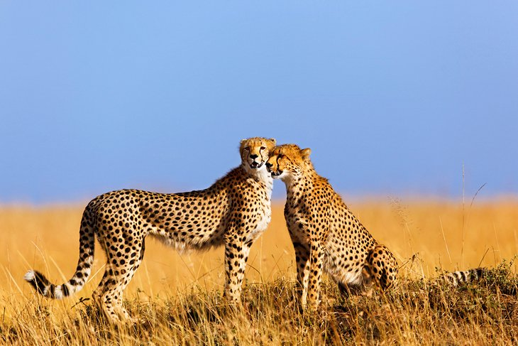 top-places-to-visit-in-the-world-masai-mara-kenya.jpg