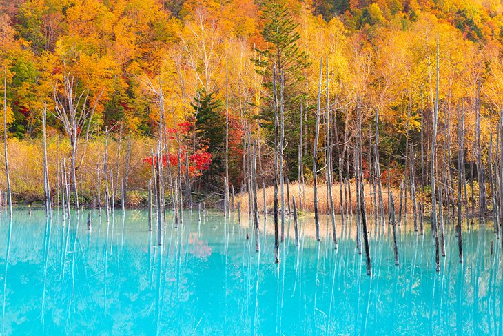 Blue Pond in Hokkaido with fall colors