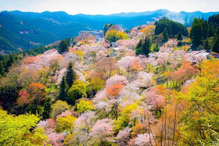 7 Spot Foto Menarik di Jepang Untuk Pecinta Fotografi Unik