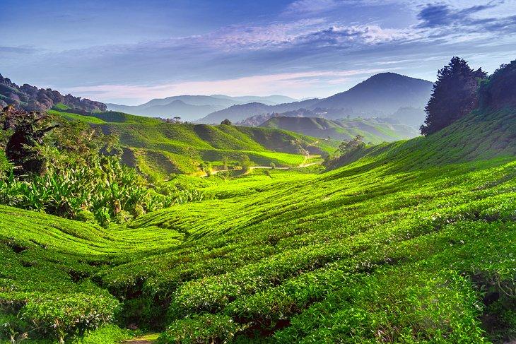 ارتفاعات کامرون پاهانگ مالزی