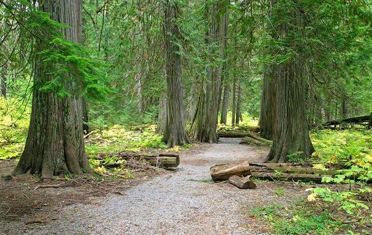 Área escénica de Ross Creek Cedar, cerca de Bad Medicine Campground