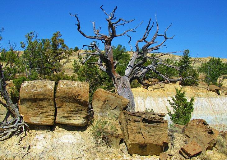 Formaciones en Terry Badlands Wilderness Study Area