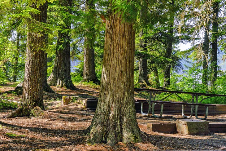 Campamento Sprague Creek