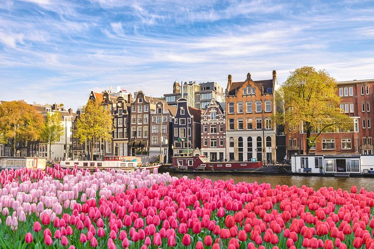 Tulip-lined canal in Amsterdam
