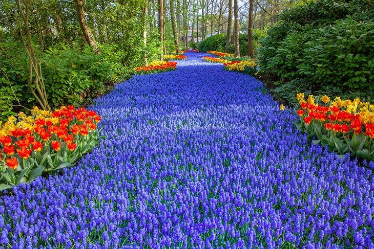 Beautiful flowers in Keukenhof Park